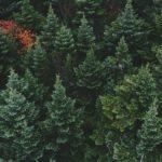 Воркшоп «Экологическое волонтерство»