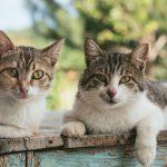 Встреча книжного клуба: Дни Савелия, или как живется в Москве людям и котам