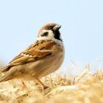 Лекция Птичьи права