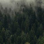 Своя лекция «Как горожанам сохранить лес?»