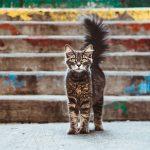 Второй московский съезд волонтеров в помощь животным